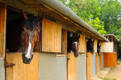 Cavalos no estábulo imagens de stock royalty free
