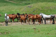 Cavalos no glade do moutain foto de stock
