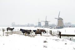 Cavalos no inverno com os moinhos de vento tradicionais nos Países Baixos Fotografia de Stock Royalty Free