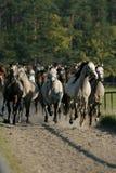 Cavalos no outono Fotografia de Stock