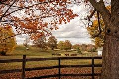 Cavalos no outono Fotografia de Stock Royalty Free