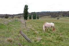 Cavalos no pasto Imagens de Stock