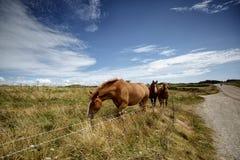 Cavalos no pasto fotos de stock royalty free