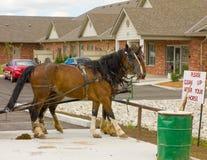 Cavalos no território de amish fotografia de stock