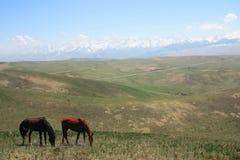 Cavalos no transporte-Ili Alatau dos prados Fotos de Stock Royalty Free
