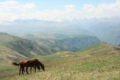 Cavalos no transporte-Ili Alatau dos prados Imagens de Stock