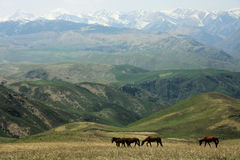 Cavalos no transporte-Ili Alatau dos prados Foto de Stock Royalty Free