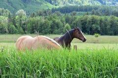 Cavalos no vale fotos de stock