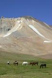 Cavalos no vale Fotografia de Stock Royalty Free