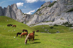 Cavalos nos alpes Fotografia de Stock