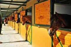 Cavalos nos estábulos