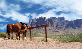 Cavalos ocidentais selvagens da cidade amarrados ao cargo Fotografia de Stock Royalty Free