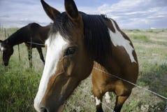 Cavalos pela cerca Fotos de Stock