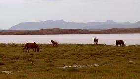 Cavalos por um lago vídeos de arquivo