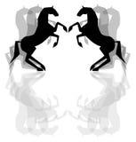 Cavalos pretos Fotografia de Stock Royalty Free