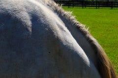 Cavalos pretos, marrons e brancos no campo no dia Fotos de Stock