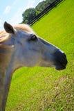 Cavalos pretos, marrons e brancos no campo no dia Imagens de Stock