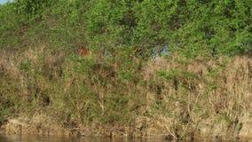 Cavalos que andam no banco de rio vídeos de arquivo