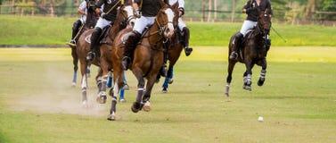 Cavalos que correm em um fósforo do polo Imagens de Stock Royalty Free