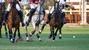 Cavalos que correm em um polo imagem de stock royalty free