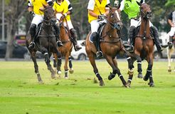 Cavalos que correm em um polo Fotografia de Stock