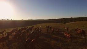 Cavalos que correm no movimento lento vídeos de arquivo