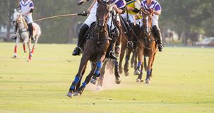 Cavalos que correm no polo Fotografia de Stock