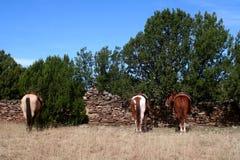 Cavalos que esperam lá vaqueiros Fotos de Stock Royalty Free