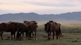 Cavalos que estão com as cabras e os carneiros que andam atrás deles vídeos de arquivo