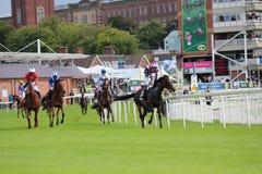 Cavalos que galopam em raças de York, Inglaterra, em agosto de 2015 Fotografia de Stock Royalty Free