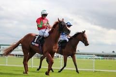 Cavalos que galopam em raças de York, Inglaterra, em agosto de 2015 Foto de Stock Royalty Free