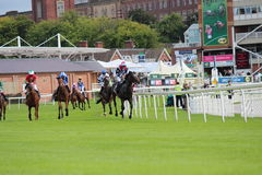 Cavalos que galopam em raças de York, Inglaterra, em agosto de 2015 Fotos de Stock