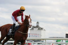 Cavalos que galopam em raças de York, Inglaterra, em agosto de 2015 Imagens de Stock