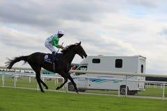Cavalos que galopam em raças de York, Inglaterra, em agosto de 2015 Fotos de Stock Royalty Free