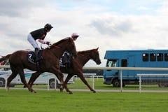 Cavalos que galopam em raças de York, Inglaterra, em agosto de 2015 Foto de Stock