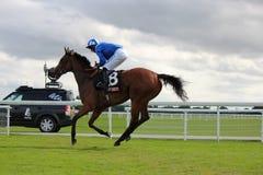 Cavalos que galopam em raças de York, Inglaterra, em agosto de 2015 Imagem de Stock
