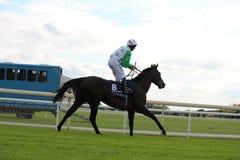 Cavalos que galopam em raças de York, Inglaterra, em agosto de 2015 Fotografia de Stock