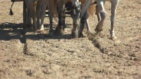 Cavalos que galopam na frente de um transporte vídeos de arquivo