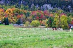 Cavalos que olham em cores da queda do escarpment de Niagara foto de stock royalty free