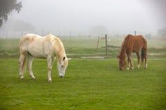 Cavalos que pastam em um dia nevoento fotos de stock royalty free