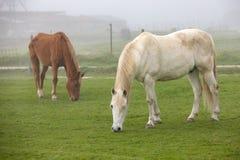Cavalos que pastam em um dia nevoento imagens de stock