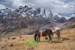 Cavalos que pastam no platô da montanha, Andes imagem de stock