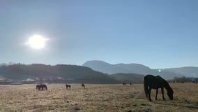 Cavalos que pastam filme