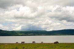 Cavalos que pastam pela montanha Fotos de Stock