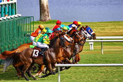 Cavalos que saem da porta do thr foto de stock