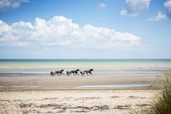 Cavalos que trotam na praia fotografia de stock