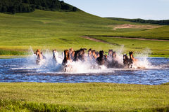 Cavalos running no lago Imagens de Stock Royalty Free