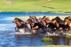 Cavalos running no lago Fotos de Stock Royalty Free