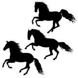 Cavalos running pretos no branco Imagem de Stock