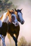 Cavalos selvagens fotos de stock royalty free